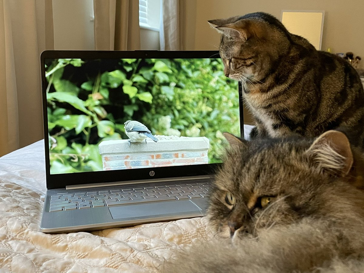Leo has introduced me to Cat TV, we've been watching it together today - it's so much fun. #Caturday