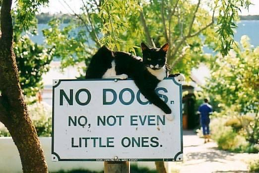 See it says dogs...  I iz not a dog.. ergo, this sign means nothing to me...  #Caturday #LikeABoss #Cats