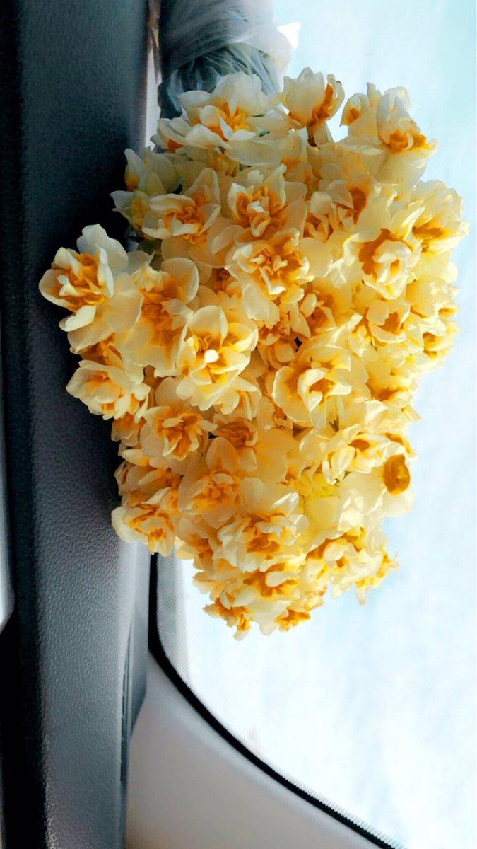 #my #favorite #flower  #nergezit #akre 🌼💛