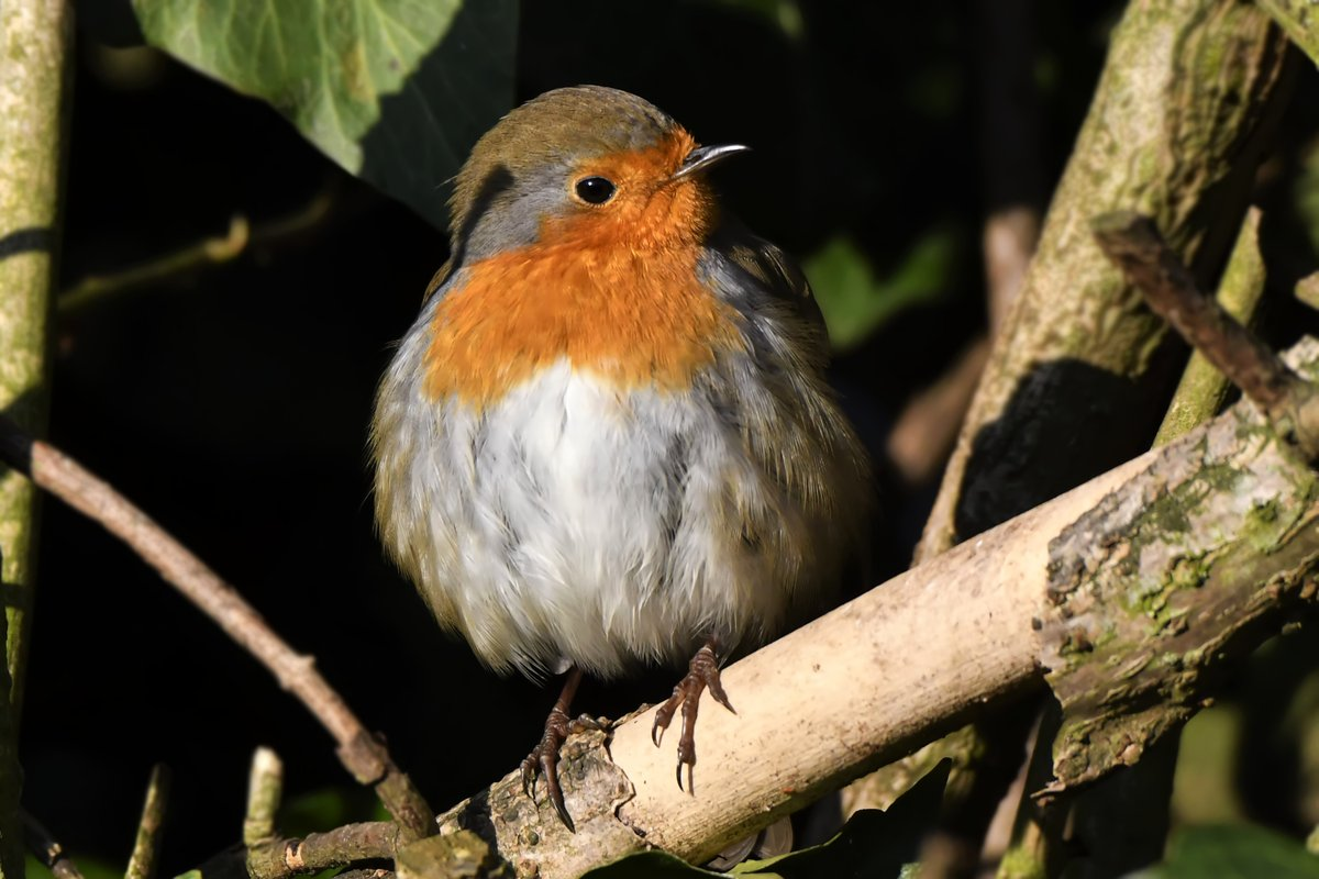 Have a blessed and peaceful evening my friends Goodnight God Bless from myself and little Susie #twitternaturecommunity #beautiful #hope #Goodnight #inmygarden #nature #blessed