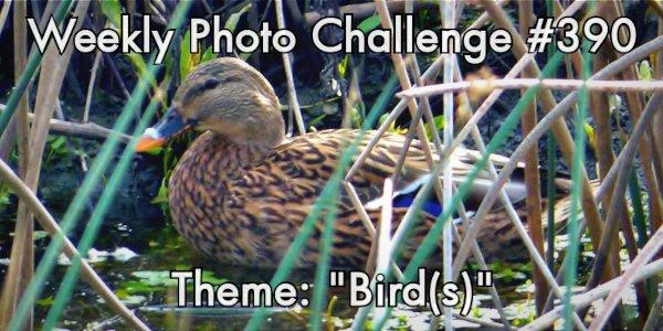 "Sacramento Photographers #SPG #WPC next theme ""Birds""   #DSLR #photo #Image #flickr  #SaturdayMotivation #SaturdayThoughts #SaturdayMorning"