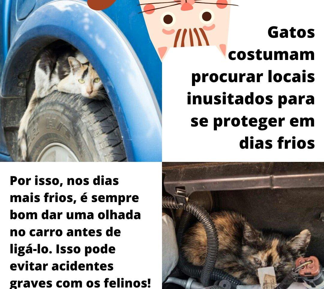 @jotahenriques Fica o alerta para se verificar os pneus, o motor, embaixo do carro, pois são lugares quentinhos onde os gatos procuram se abrigar do frio e dos cachorro 👀🐱