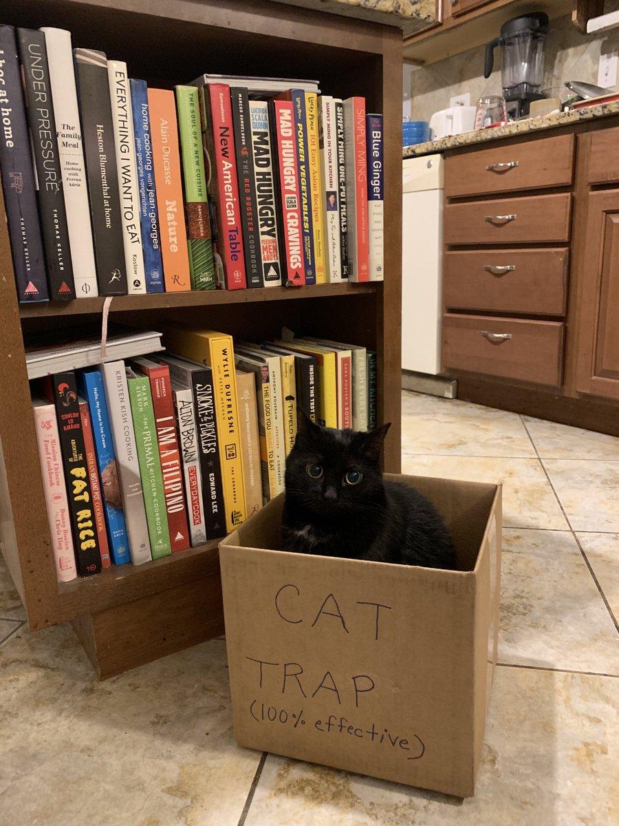 Patent pending.   #Caturday #CatsOfTwitter