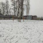 Image for the Tweet beginning: Beerse licht sneeuw, .sneeuwdek 1,5cm