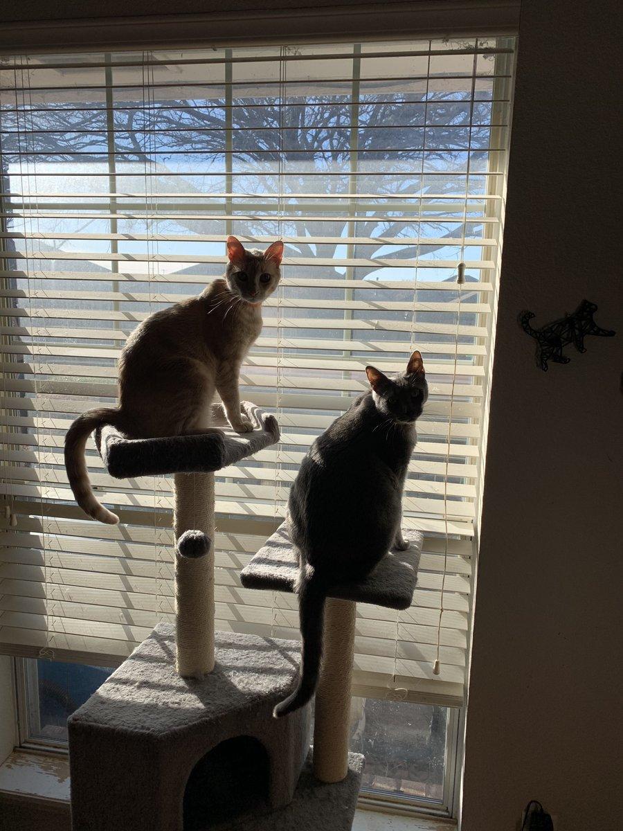 Sunny #caturday morning.