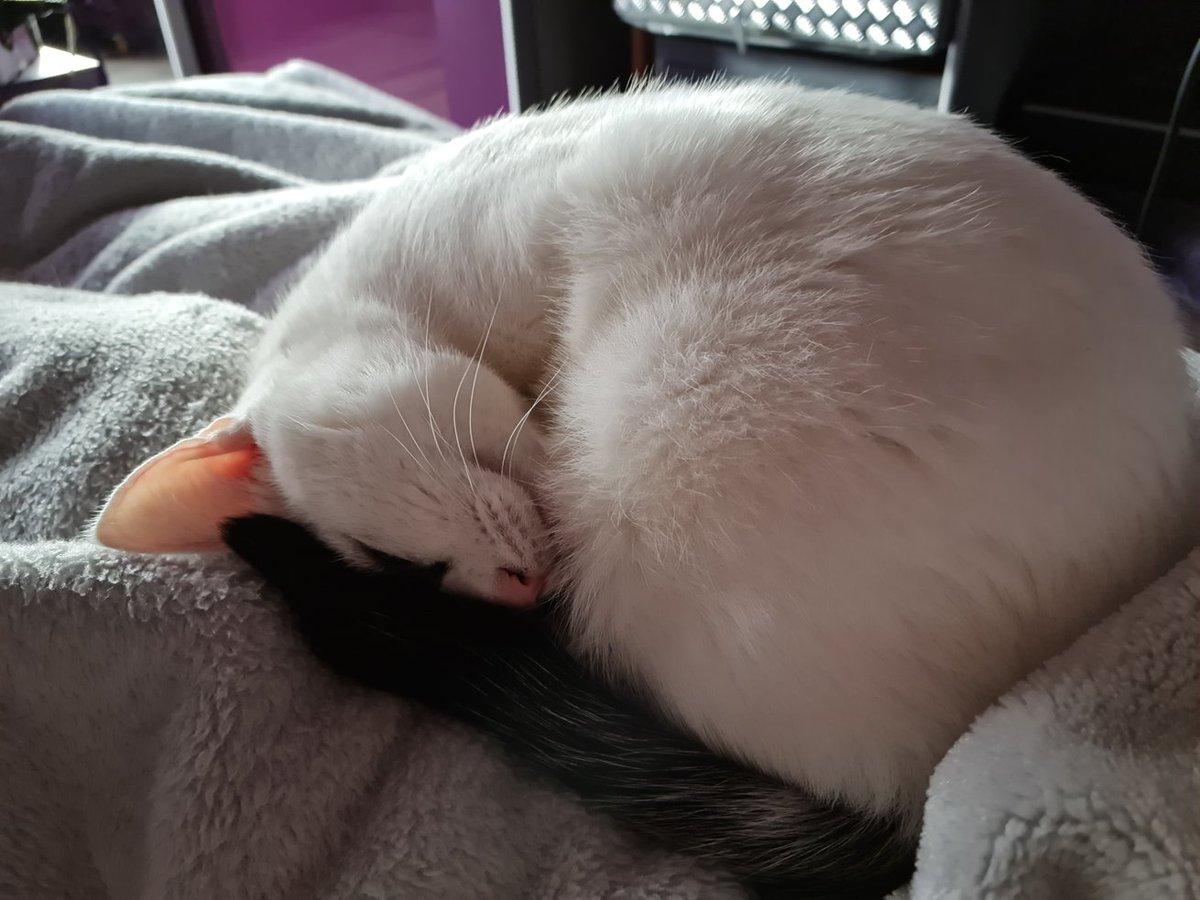 Sleepyhead #caturday