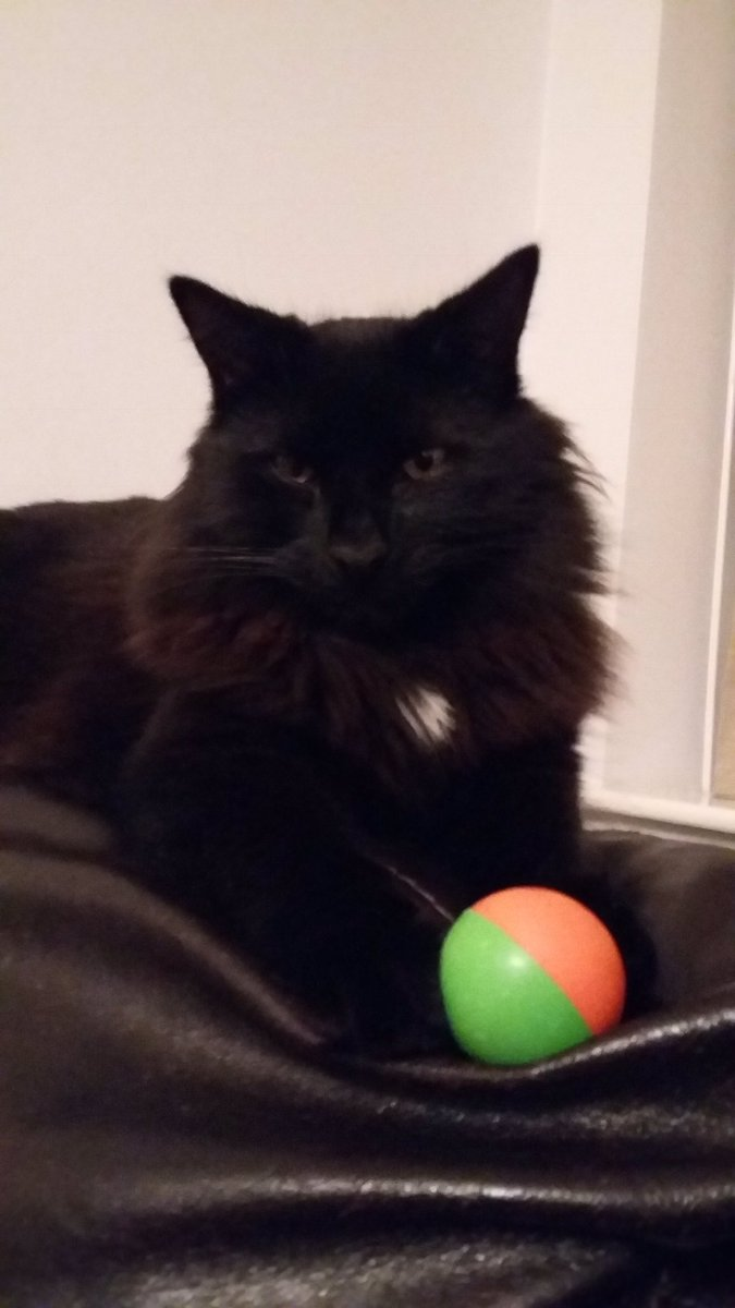 @thechrisbarron Happy #Caturday, Chester, always missed 😽