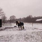 Image for the Tweet beginning: Merksplas 17u #vrtweer #sneeuw #weer