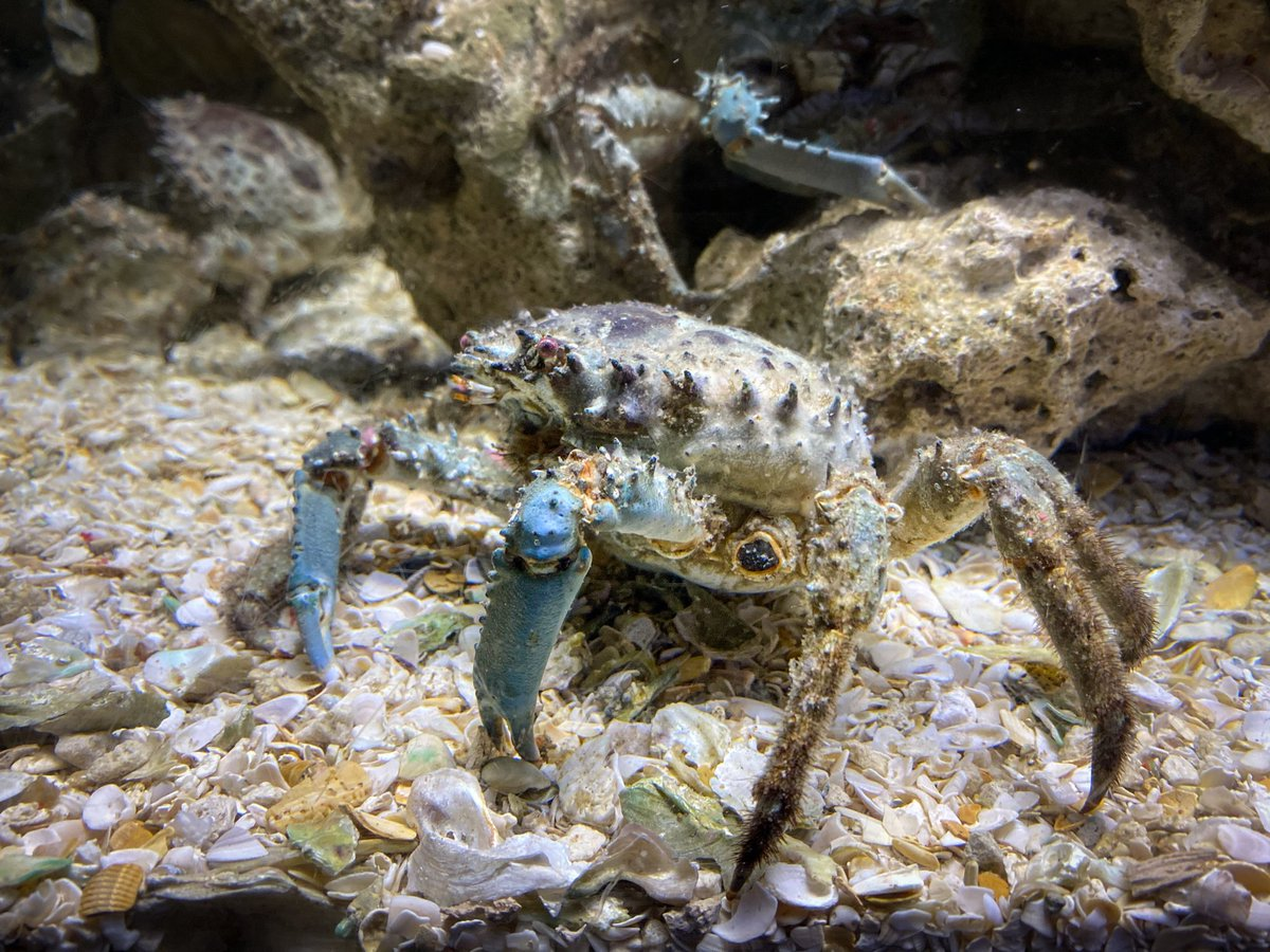 What a wonderful underwater world! 🦀 #FloridaAquarium #ClingingCrab