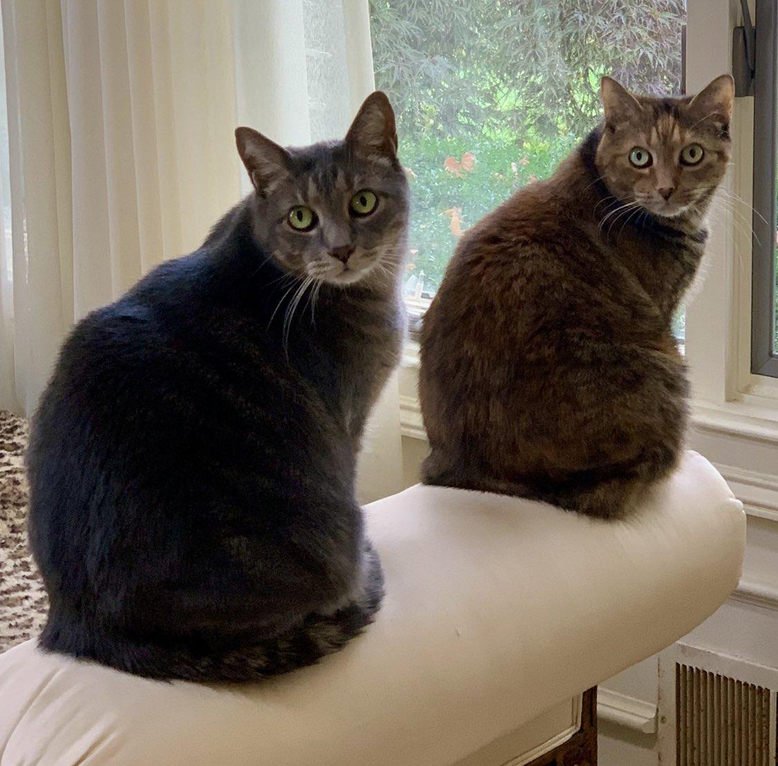 Griffin & Gidget 🐾 @thechrisbarron #caturday