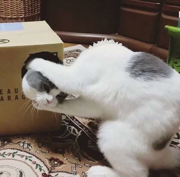 The latest trick by up-and-coming cat magician Hairy Houdini... ta daaaaa!  Don't try this at home, kittens...  #cat #cats #catsofinstagram #kitten #kittens #caturday #Saturday #magic #magictrick #harryhoudini @thechrisbarron