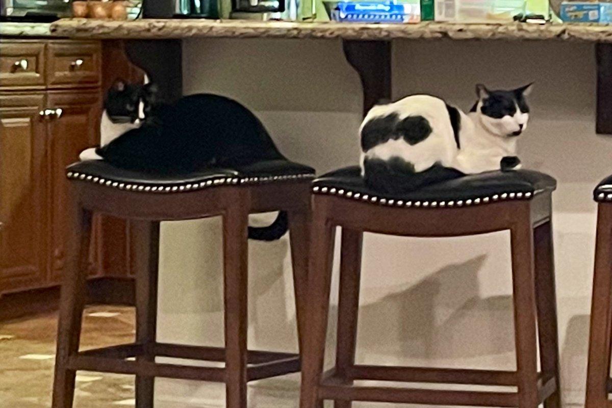 Olive & Johnny #Caturday