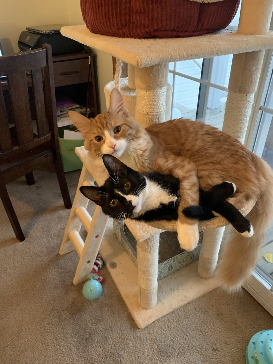 @tctphoto @thechrisbarron What's going on here kids? #Caturday