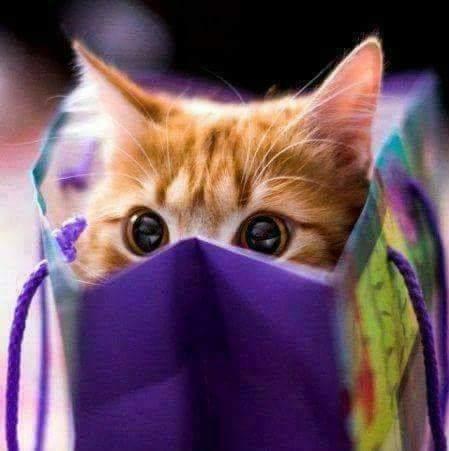 ฝานเดย์! : Health, Coffee, Cats & Comfort . . .  #Sleepy #Goodnight #SweetDreams #StillDreaming #Kitty #Cute #Cat #Love #Dog #Caturday #Puppies #Relax #Relaxed #Art #Artist #Chillin #Chic #Live #Life #Soul #Spirit Xoxo