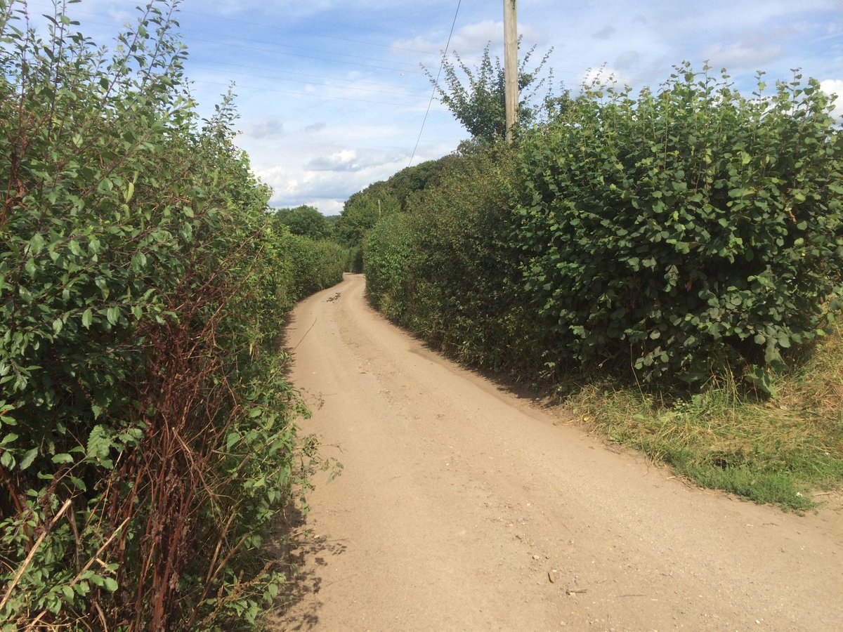 "Our Lane 2016 & now as ⁦@HS2ltd⁩ begin widening to 4m. Hedgerow on one side now removed along its length to vent shaft.  #HS2 pledged to ""minimise hedgerow loss"" & ""retain existing character of the Lane"". ⁦@mpcsg⁩ ⁦@CherylGillan⁩ ⁦@ChilternSociety⁩"