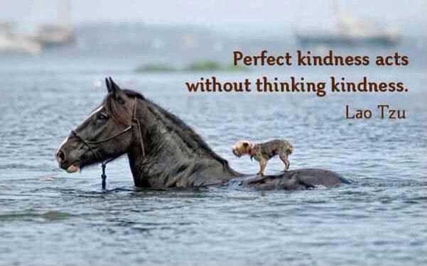 #ProsocialSkills: 1) #forgiveness 2) #gratitude 3) #impartiality 4) #empathy 5) #compassion  6) #Integrity  7) #love   Be kind.