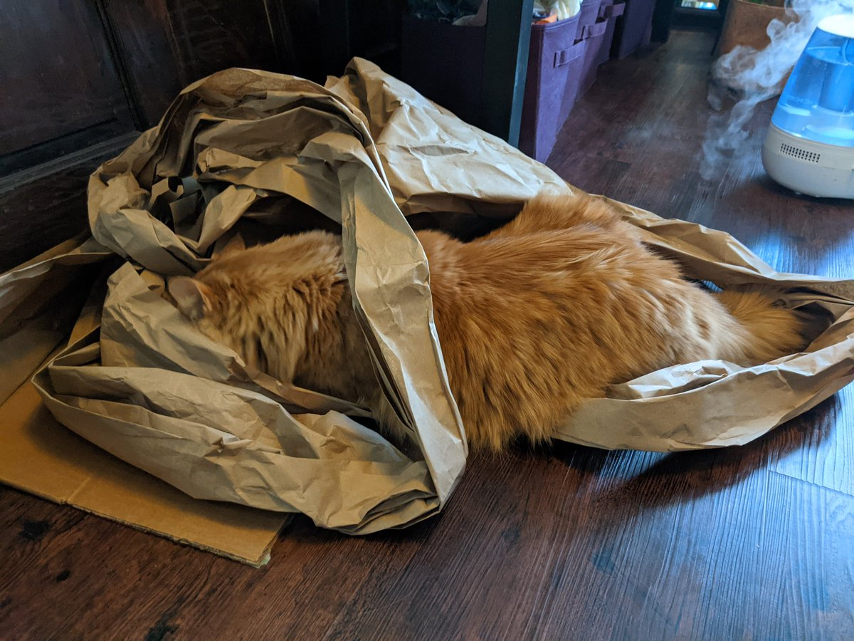 For #Caturday Gene is transforming trash nest into trash cave.