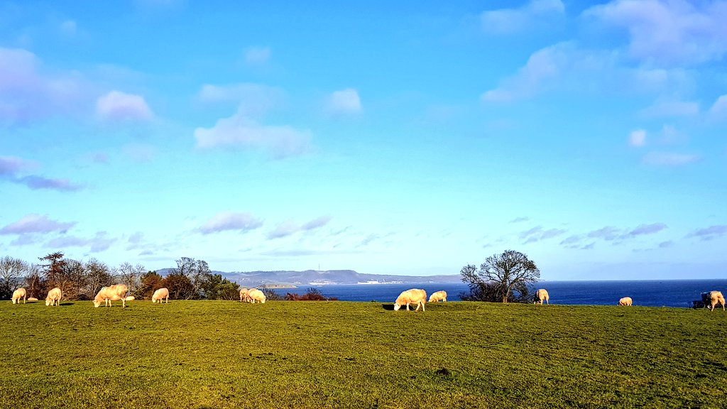 Sheep enjoying the afternoon sun #SaturdayThoughts #weekend #nature #photography #animals #countryside #Scotland #Views #sheep