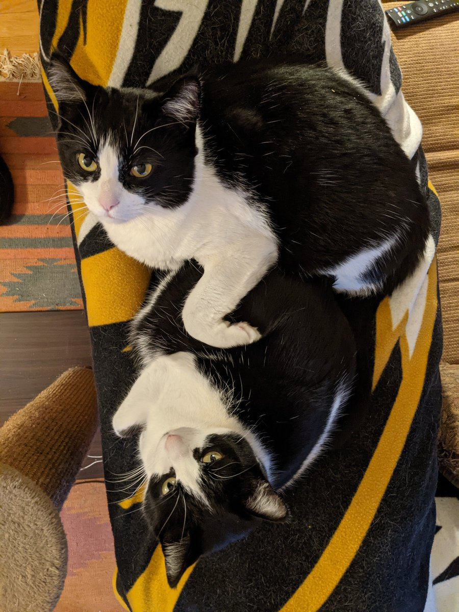 Happy #Caturday! May your fleece be warm and your couch be comfy.