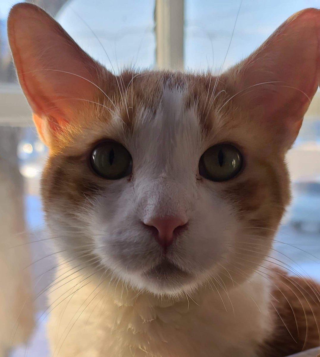 #Caturday Professor Professorson says Happy Caturday!