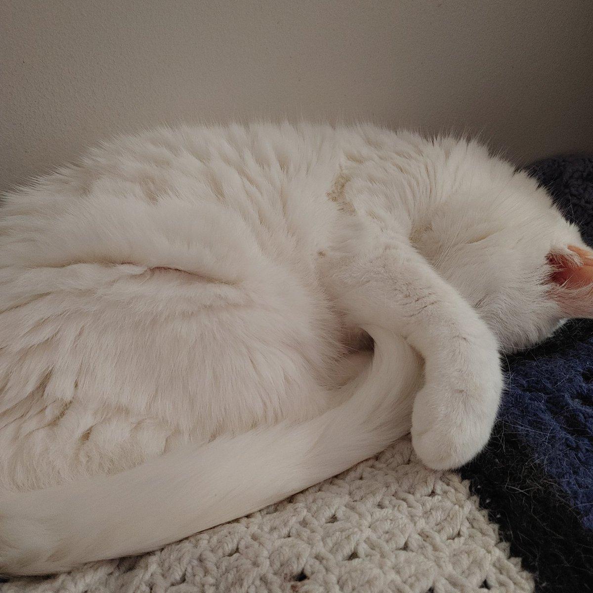Naps.  #Caturday