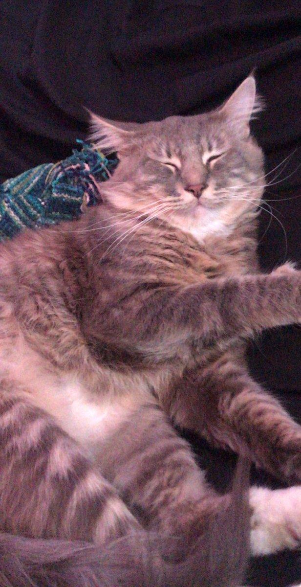 HAPPY #Caturday I LOVE MY STEVIE