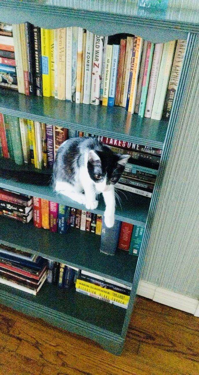 Joy loves reading on a lazy #Caturday like today.