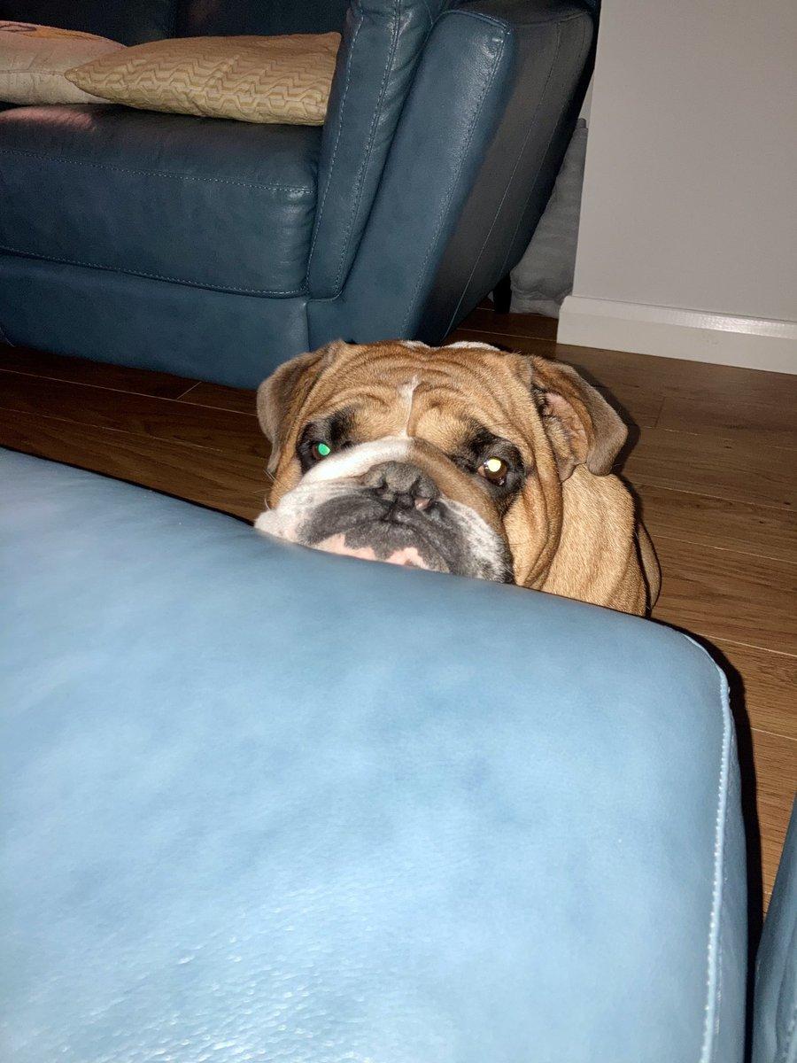 The I wanna get on the sofa face! 😍