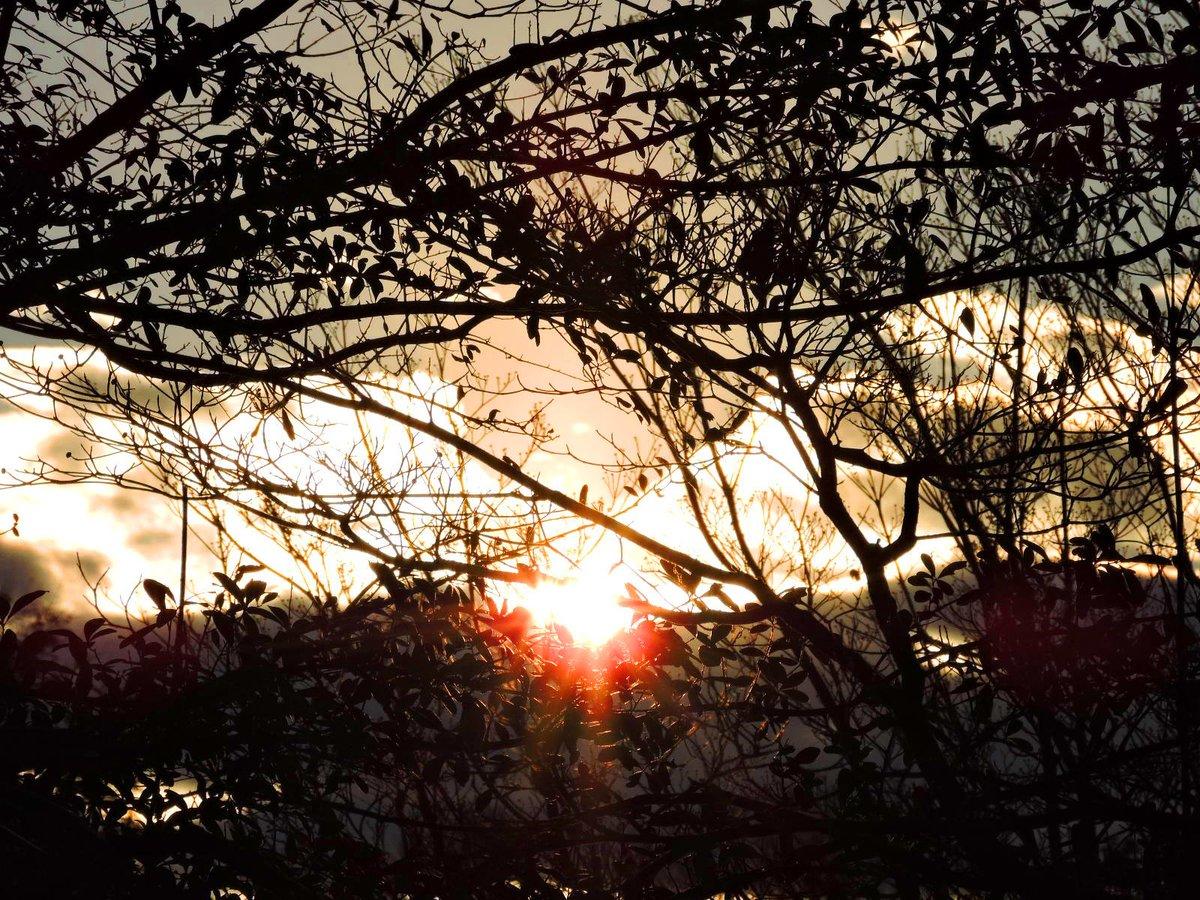 Sunset☀️☁️  #January2021 Photo By: Joseph Hill🙂📸☀️  #sunset #bright #BrightToday #cloudy #sky #evening #dusk #sunlight #trees #winter #daylight #beautiful #wow #awesome #peaceful #daytime #wintertime #Wintervibes #sunsetphotography #SouthernPinesNC #January