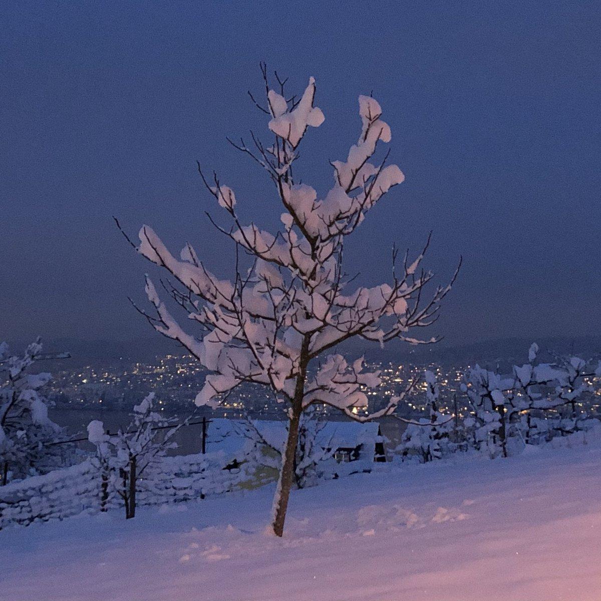 Winter wonderland at lake Zurich #nofilter