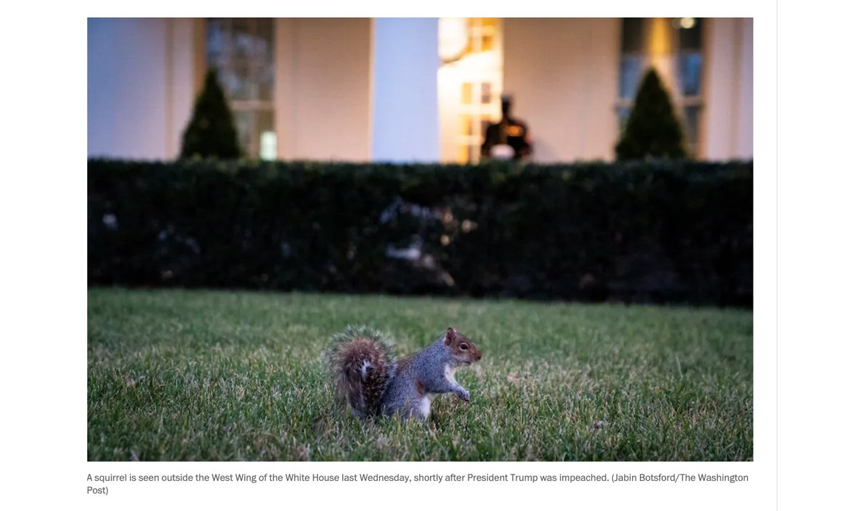 "White House photog on the wildlife beat! In this photo by @jabinbotsford, ""a squirrel is seen outside the West Wing of the White House last Wednesday, shortly after President Trump was impeached."""