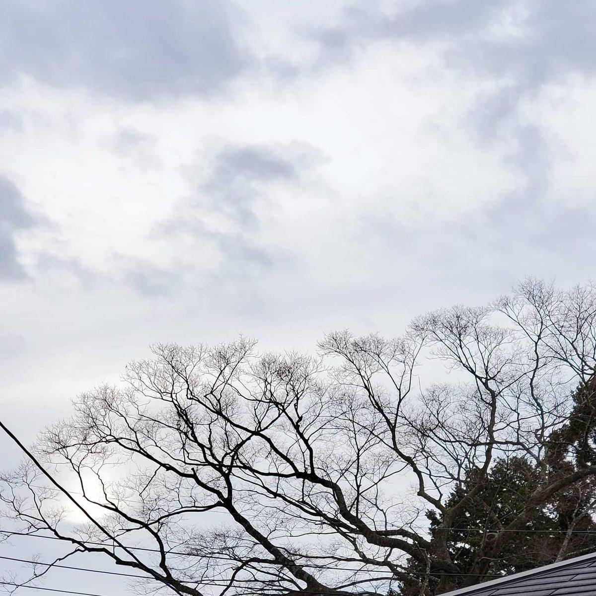 🌟今空🌟 2℃/-5℃ 静かな朝です☁️ 寒さはそれほどではありませんが昨日温かくて過ごしやすかったので今日は余計に寒く感じます😥💦 それでは元気出して介護行ってきま〰️す🙋🎶 皆さん今日も温かくしていい一日になりますように👋😊💕 #今空  #気象  #天気  #雲  #sky  #令和3年1月17日(日)