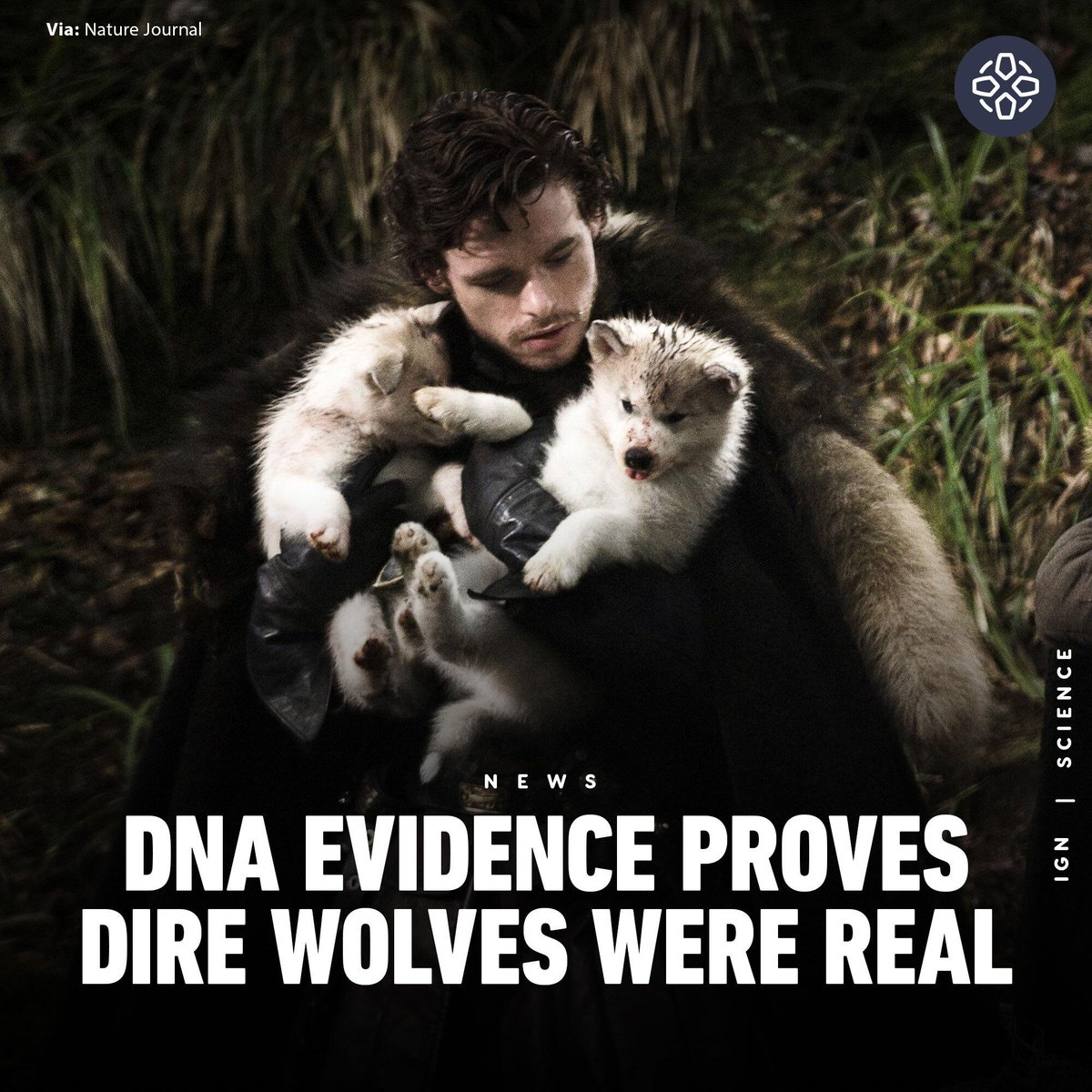 Dire Wolves existed in the Pleistocene Era of America's past. However, recent gene sequencing published by the Nature Journal reveals they have no direct relation to the modern Grey Wolf found in America. https://t.co/c2UYqXMdtq