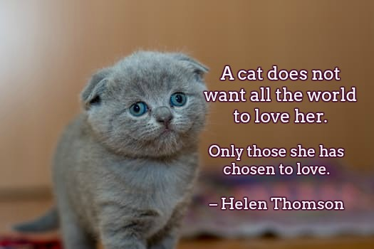 A cat does not want all the world to love her. Only those she has chosen to love. – Helen Thomson #quote #caturday