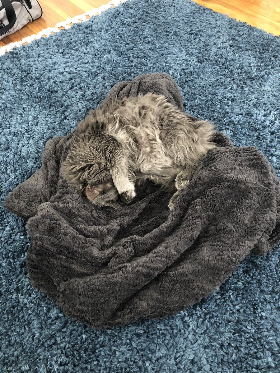Lazy day #Caturday