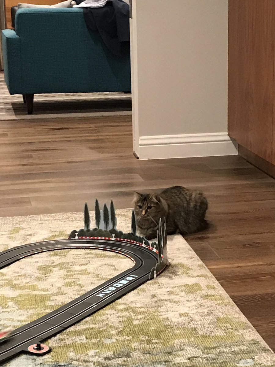 Mia honestly thinks she is hiding and ready to pounce on the cars as they race by. #caturday