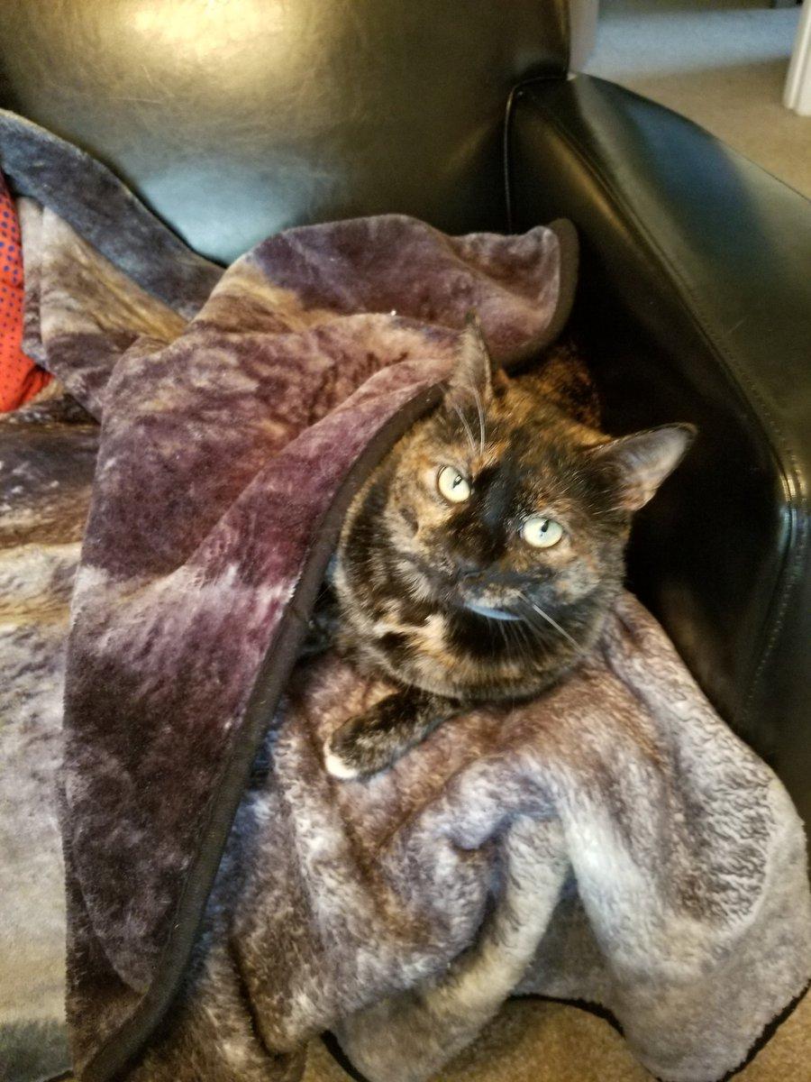 She is so precious. Happy #Caturday !