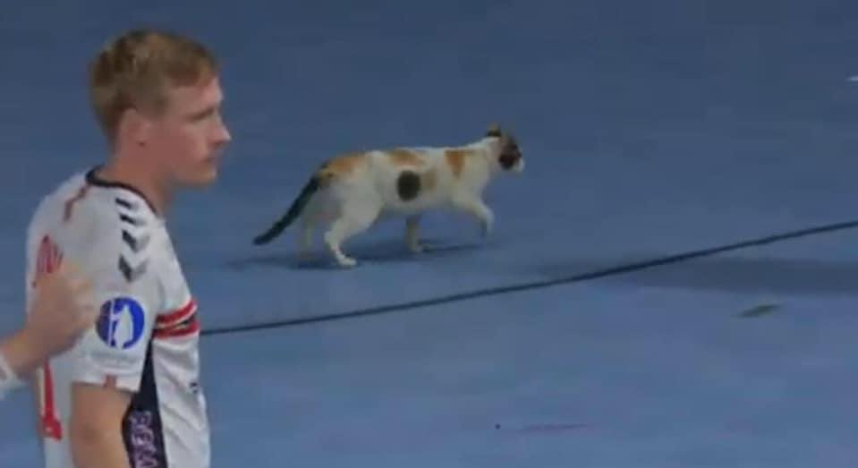 📸صورة اليوم قطة تقتحم صالة حسن مصطفى في ٦ اكتوبر وتصبح المتابع الوحيد لمباراة النرويج وسويسرا ❤️❤️🇳🇴🇨🇭