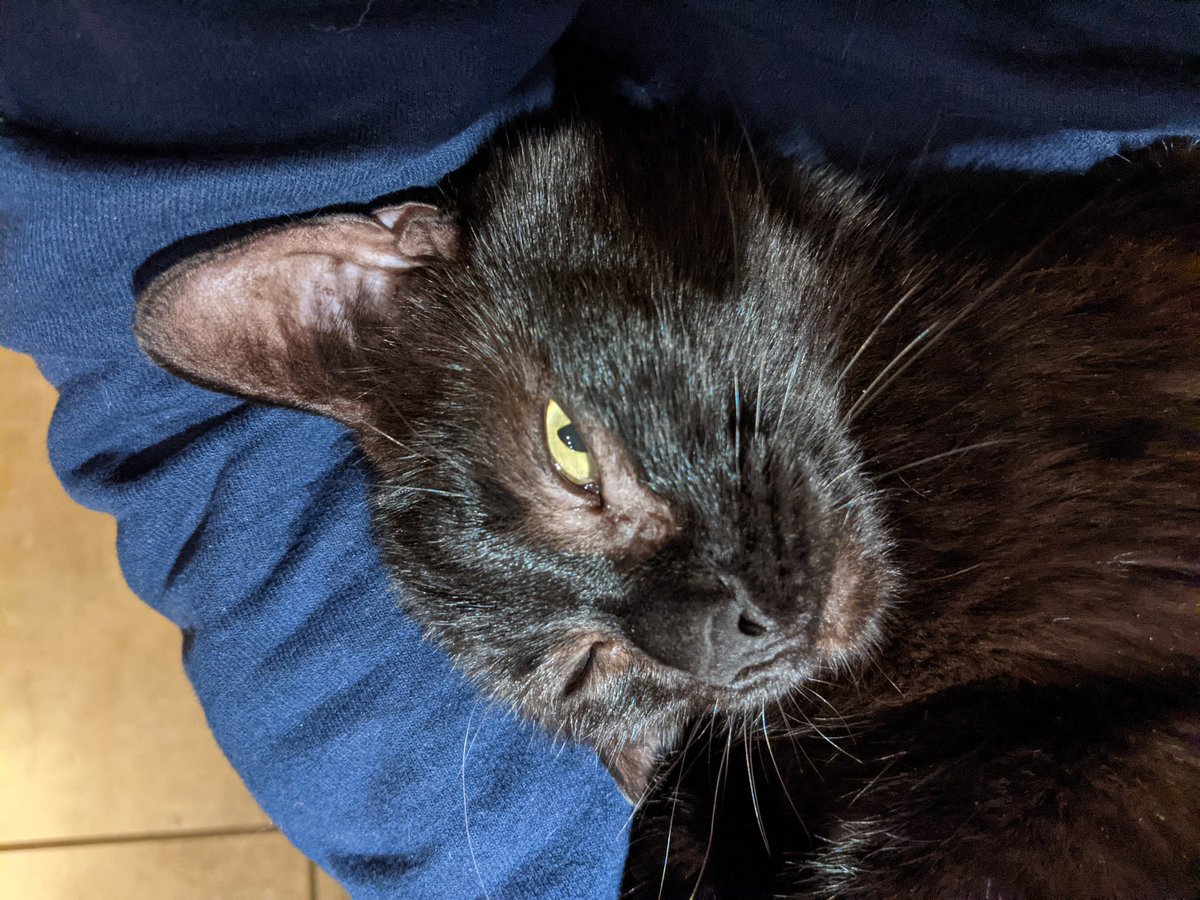 #Caturday #Caturdayview #CatsOnTwitter #CatsOfTwitter #panfursquad #blackcats #SaturdayMorning