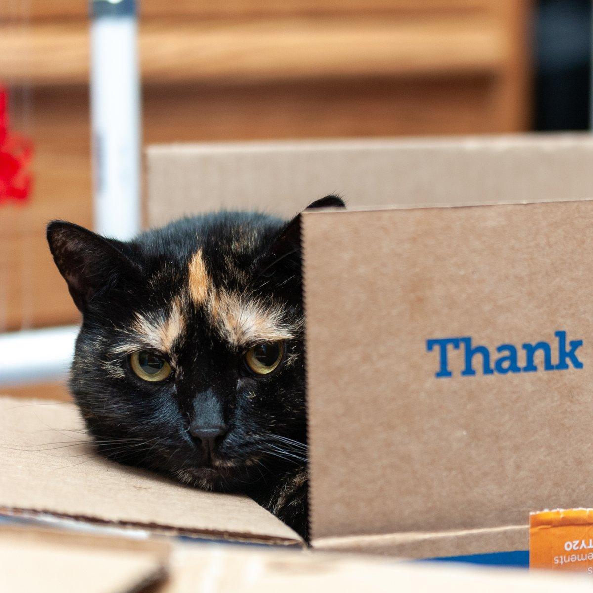 Hey, hey, it's #Caturday! #CatsOfTwitter