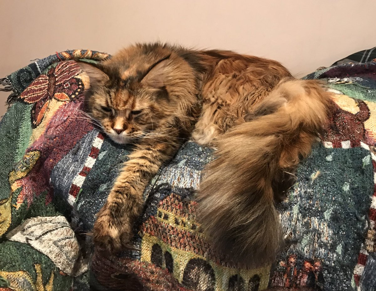 Happy #Caturday  Love, Nala.
