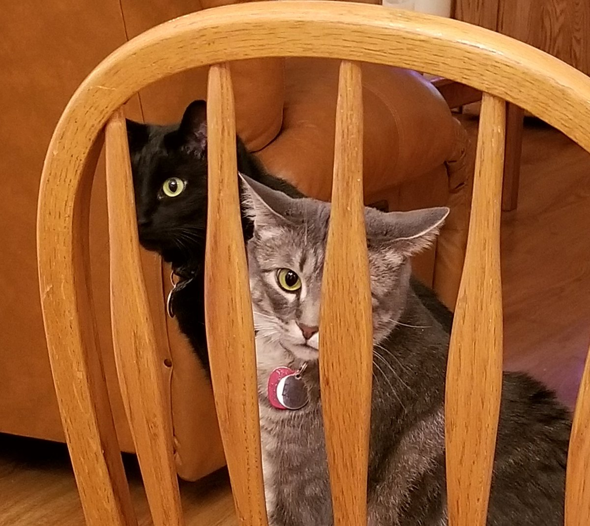 Mom! Free us! We need to eat your food! Two cats in food jail today! 😾😾 #Caturday #CatsOfTwitter
