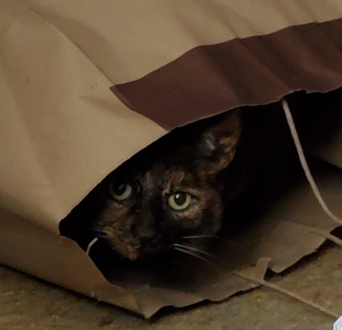 #Caturday peekings