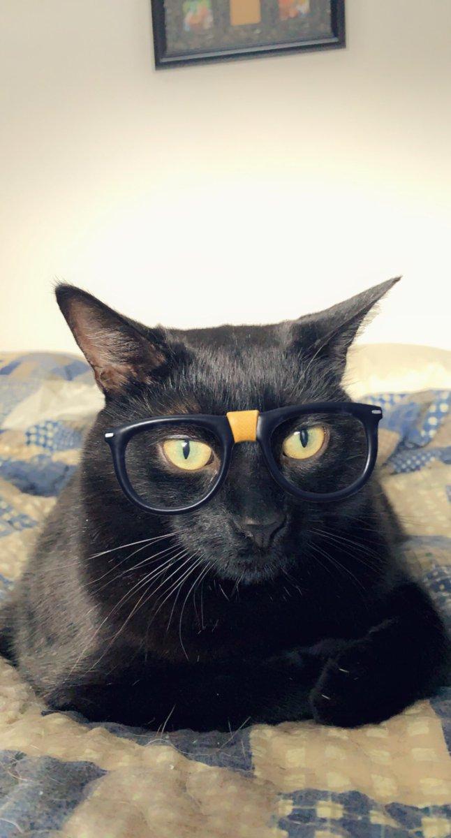 @thechrisbarron Happy #Caturday!