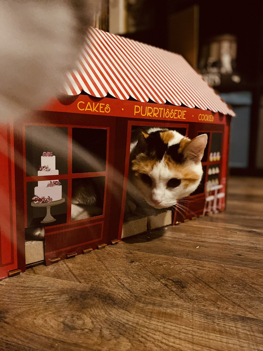 #CalicoCrew #CatsOfTwitter #Caturday #catsofinstagram #cats @CalicoCrew1 @catsofinstagram