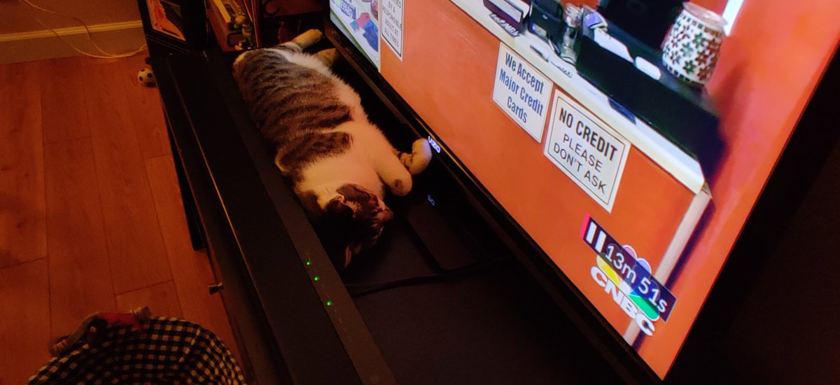 Spunk with a front row seat, can't get any closer to the screen, as he's watching TV with us!  #Caturday