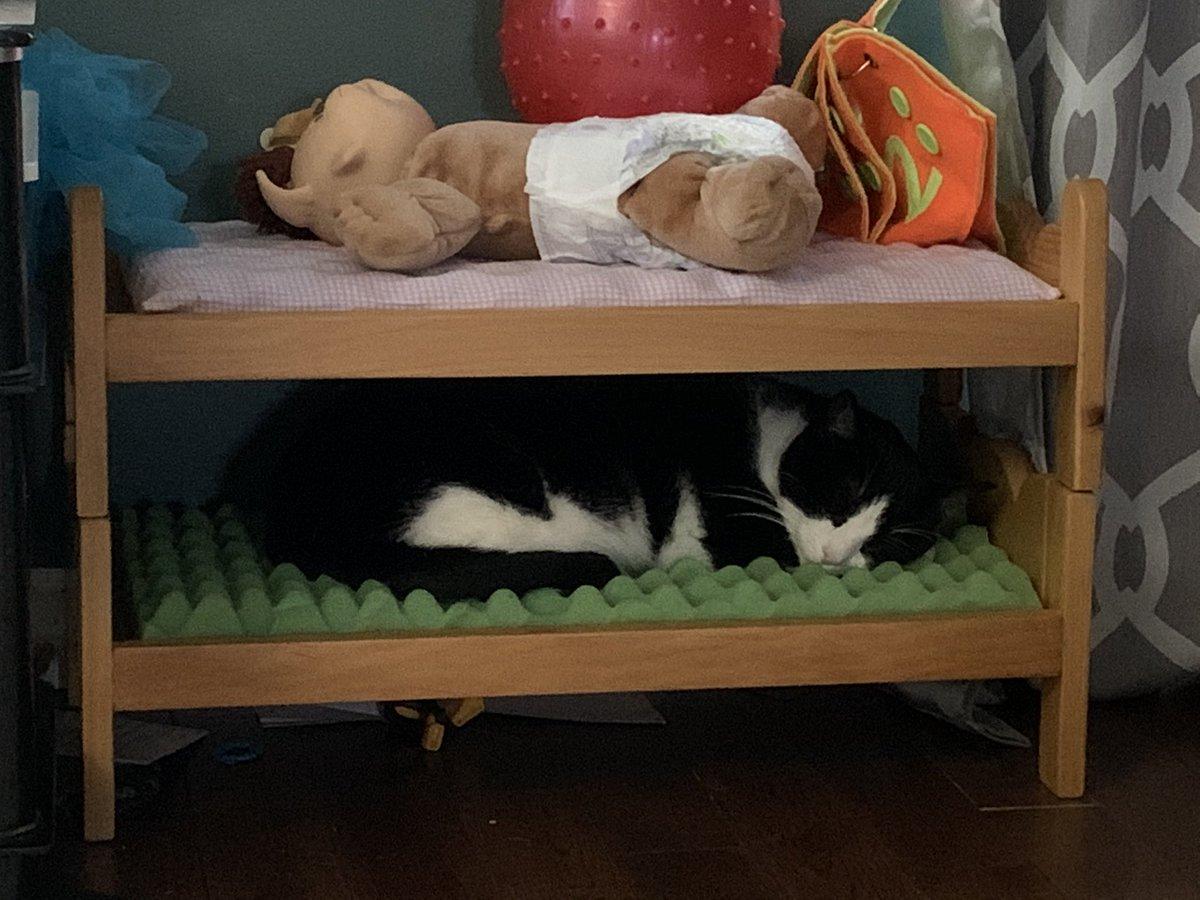 Kitty cat #Caturday #CatsOnTwitter #AdoptDontShop #cat #cats #pet #生おかゆ #nationaldressupyourpetday #fun
