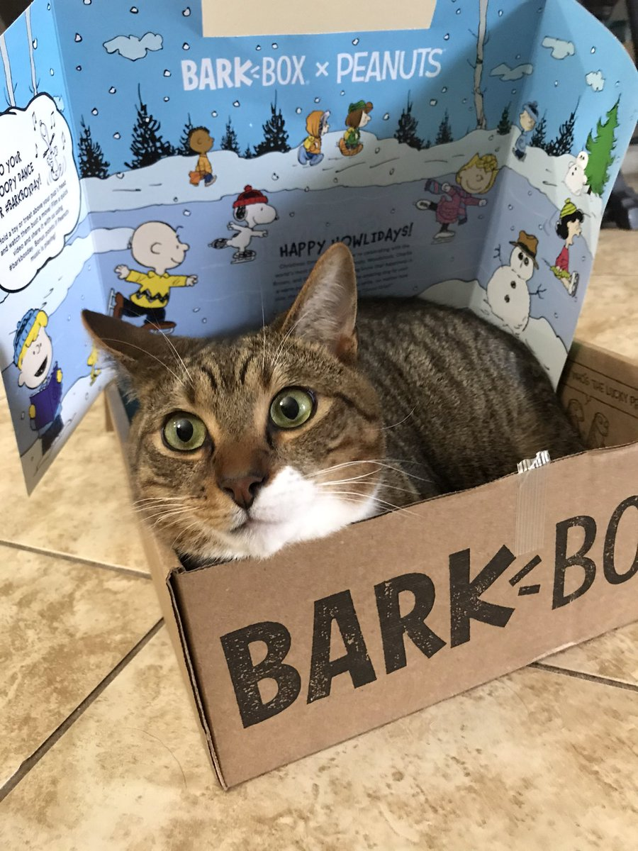 Happy #caturday Caesar loves when @barkbox arrives. Dogs get toys and he gets a new box...his fav