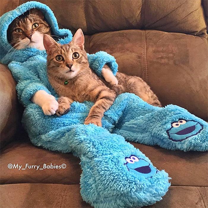 #Caturday:  #Pajamas #PajamaParty #PJs #Sleepy #Cat #Cats #CatsInCostumes #CookieMonster - Photo by my_furry_babies