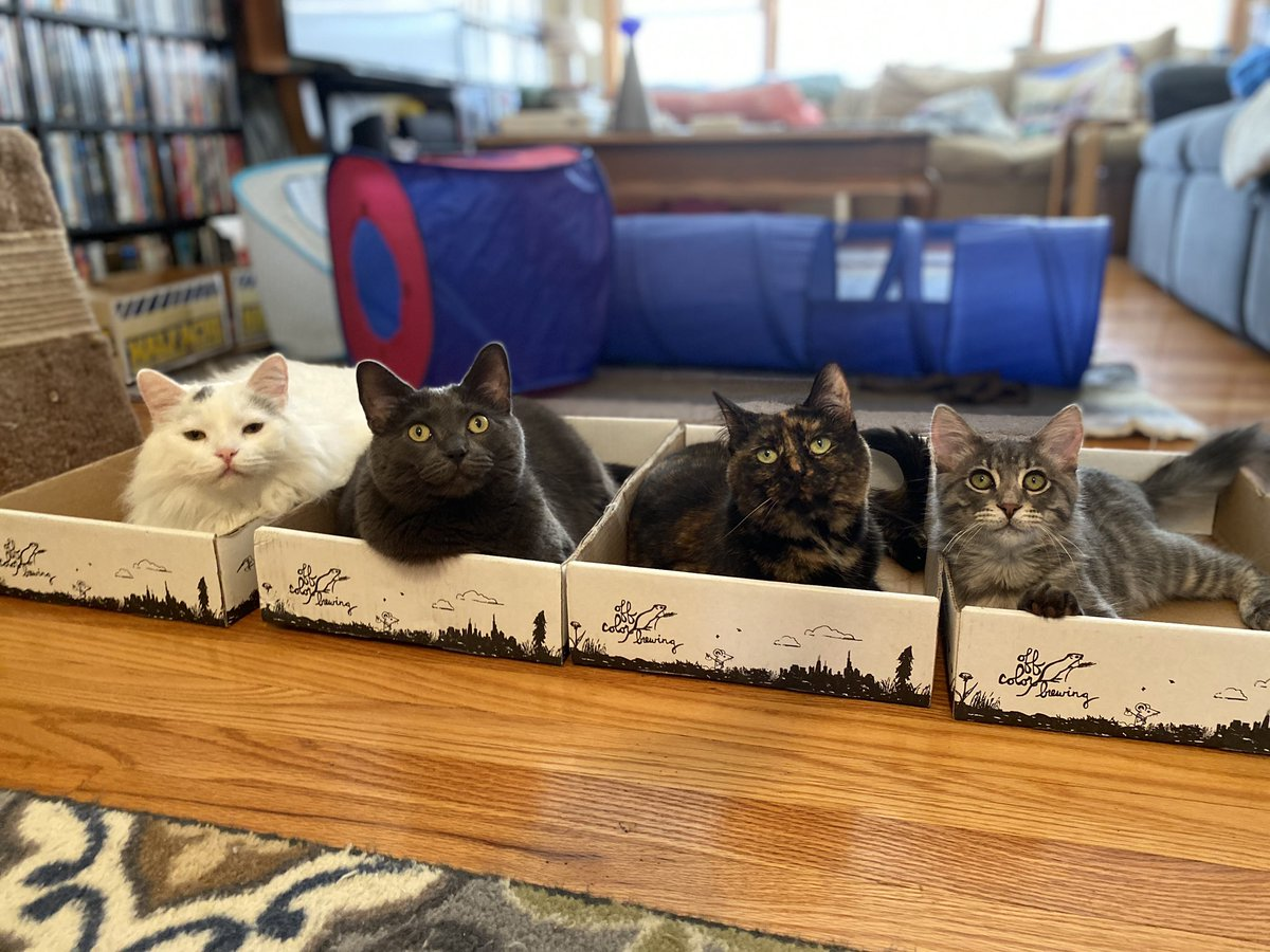 We will do everything necessary to get #catsjudgingkellyanne to trend again. Even lose followers. Who we will also judge. And we have @sportpeppercat on board this time.